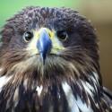 Eagle Experience