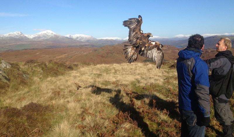 Eagle Experiences